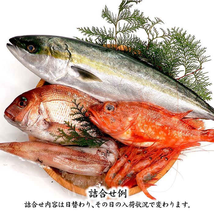 四季の魚を直送!旬の獲れたて高級鮮魚 4〜5種類詰め合わせ (石川県産/主にお刺身用・下処理済み)  ※お届け日の指定不可|maruya|02