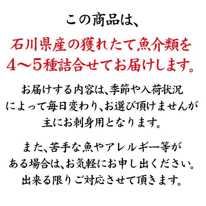 四季の魚を直送!旬の獲れたて高級鮮魚 4〜5種類詰め合わせ (石川県産/主にお刺身用・下処理済み)  ※お届け日の指定不可|maruya|05