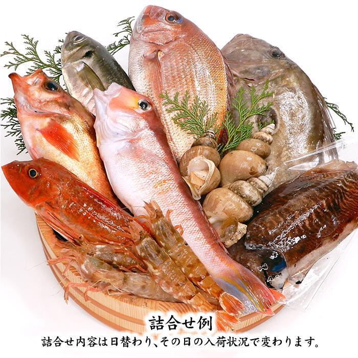 四季の魚を直送!旬の獲れたて高級鮮魚 8〜9種類詰め合わせ (石川県産 ...