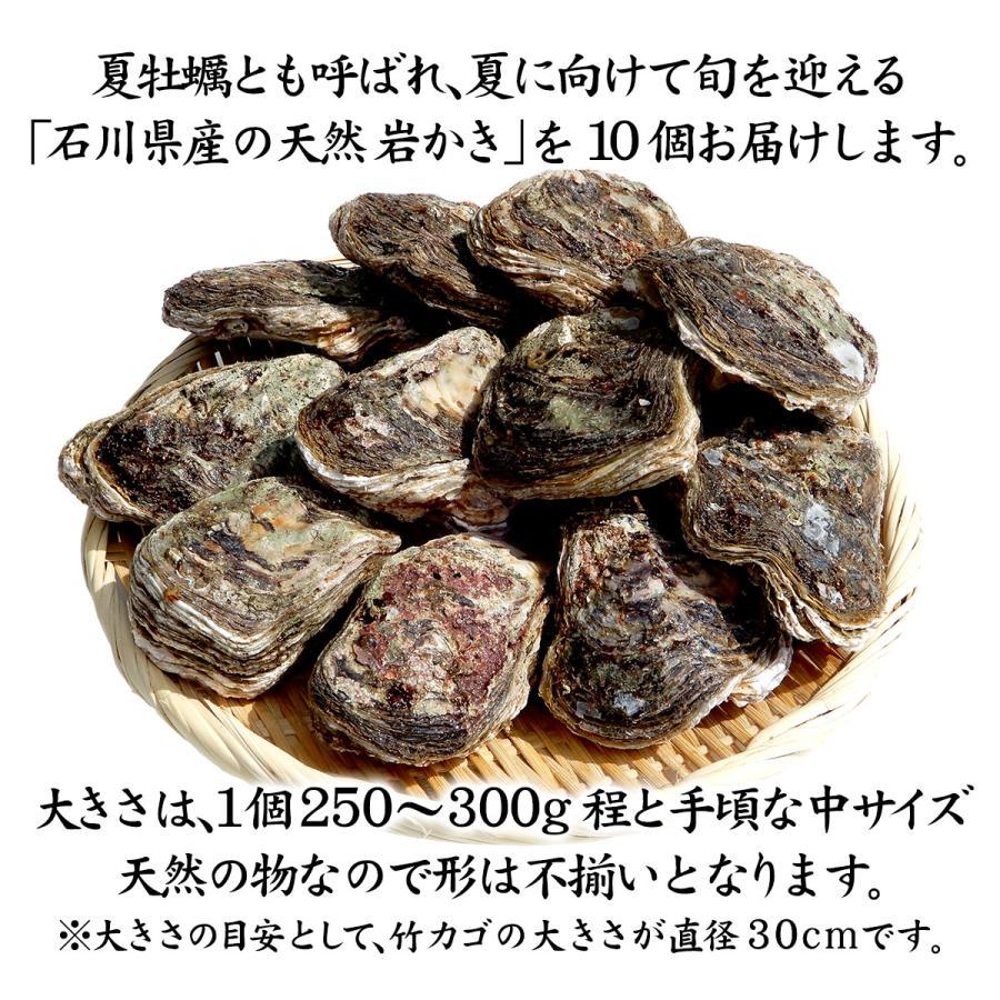 岩牡蠣 (天然 殻付き 生食用) 石川県産 中×10個|maruya|02