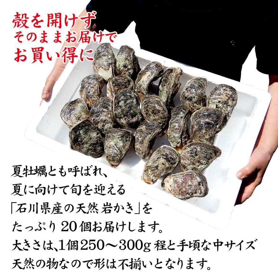 岩牡蠣 (天然 殻付き 生食用) 石川県産 中×20個 殻を開けずそのまま、お得にお届け|maruya|02