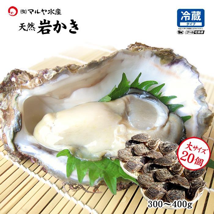 岩牡蠣 (天然 殻付き 生食用) 石川県産 大×20個 開け易いよう貝柱を切ってお届け|maruya