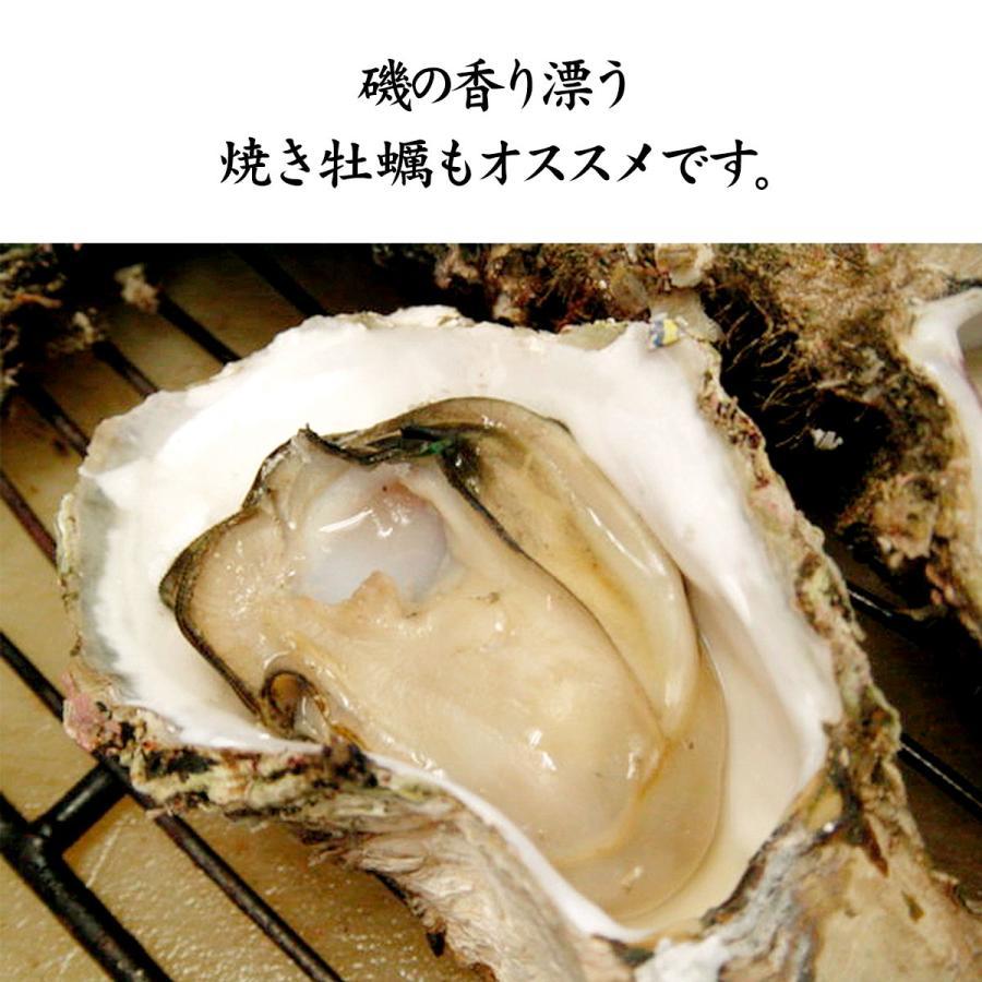岩牡蠣 (天然 殻付き 生食用) 石川県産 大×20個 開け易いよう貝柱を切ってお届け|maruya|09