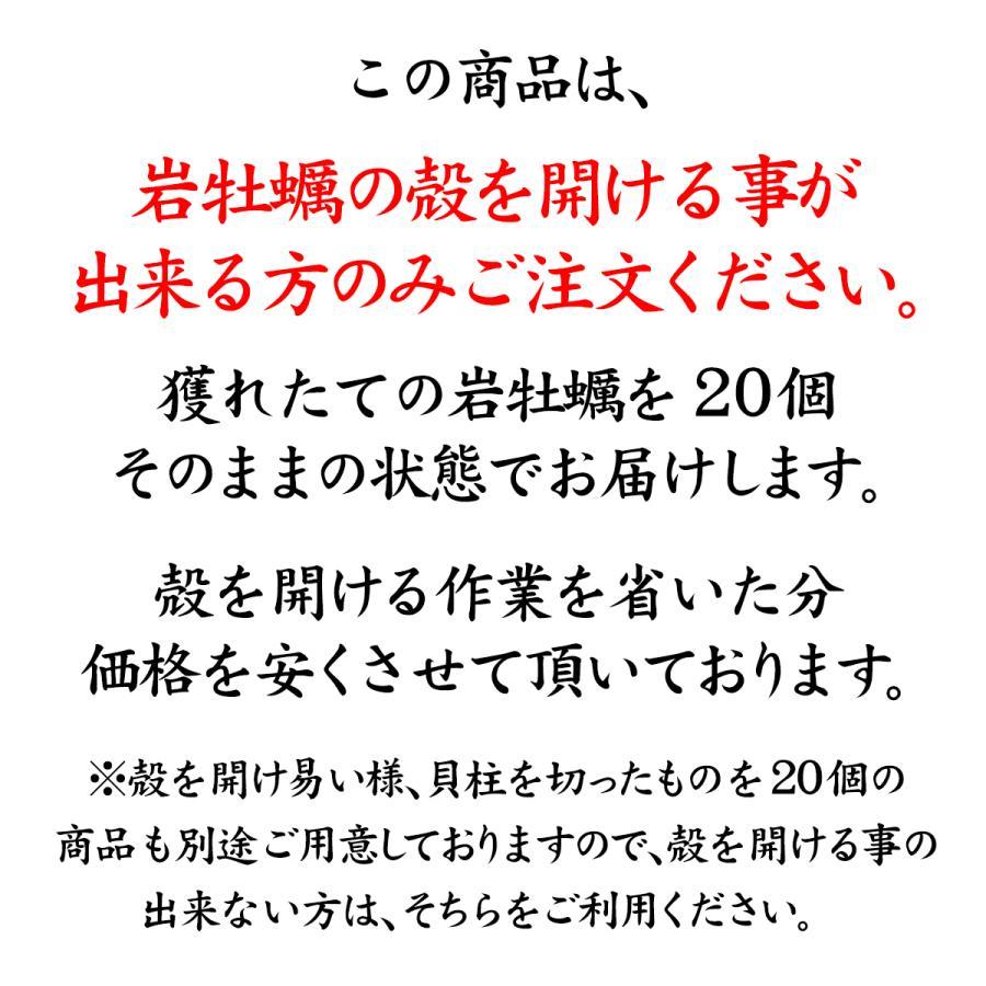 岩牡蠣 (天然 殻付き 生食用) 石川県産 大×20個 殻を開けずそのまま、お得にお届け maruya 03