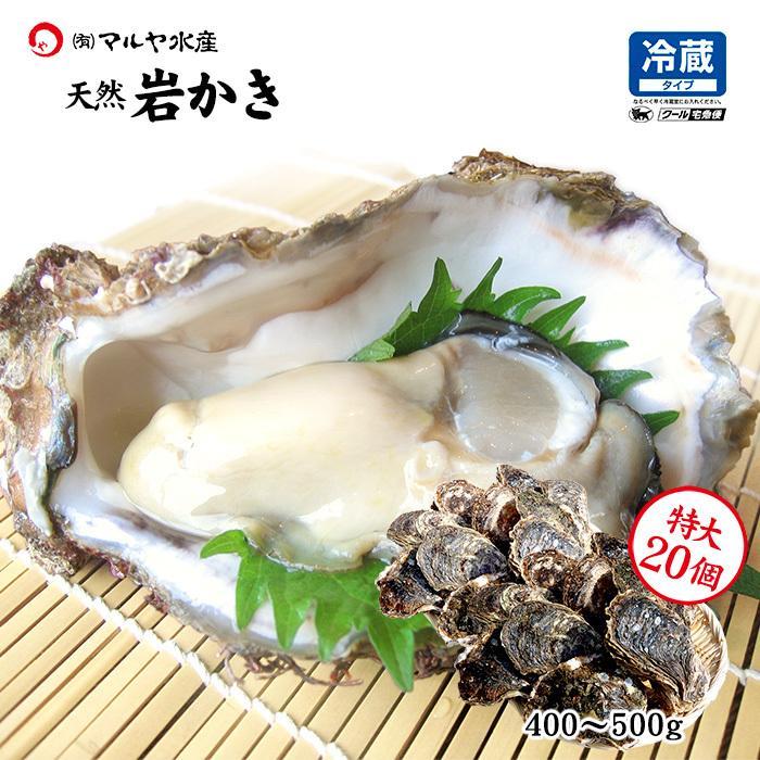 岩牡蠣 (天然 殻付き 生食用) 石川県産 特大×20個 開け易いよう貝柱を切ってお届け|maruya
