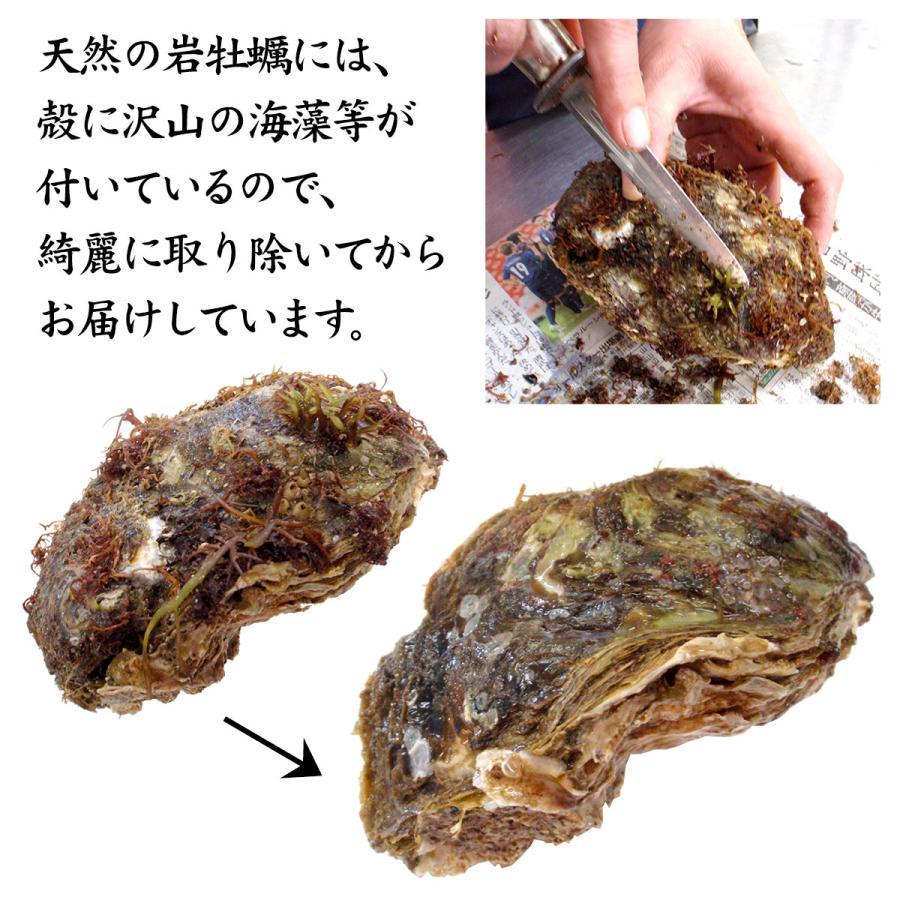 岩牡蠣 (天然 殻付き 生食用) 石川県産 特大×20個 開け易いよう貝柱を切ってお届け|maruya|05