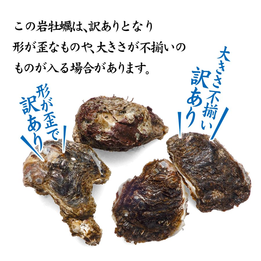 岩牡蠣 (天然 殻付き 生食用) 石川県産 お試し訳あり 3〜5個 合計1kg以上 maruya 03