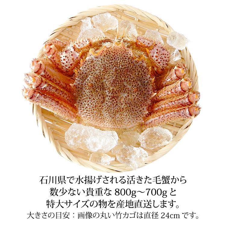 数量限定入荷!活毛蟹 1匹 800g〜700g (石川県産)|maruya|02