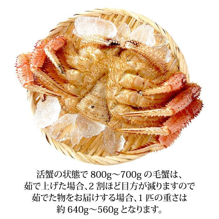 数量限定入荷!活毛蟹 1匹 800g〜700g (石川県産)|maruya|03