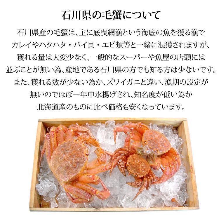 数量限定入荷!活毛蟹 1匹 800g〜700g (石川県産)|maruya|05