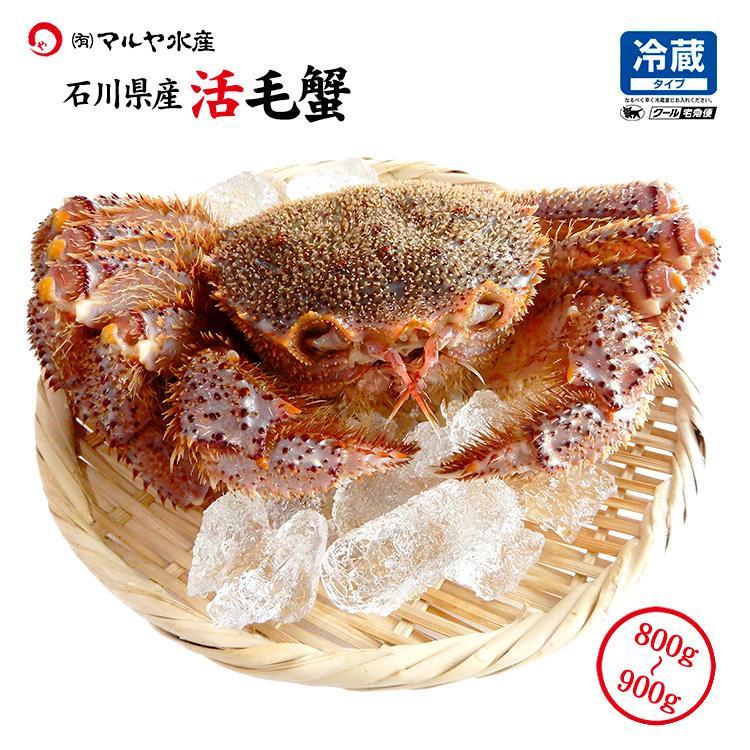 数量限定入荷!活毛蟹 1匹 900g〜800g (石川県産) maruya