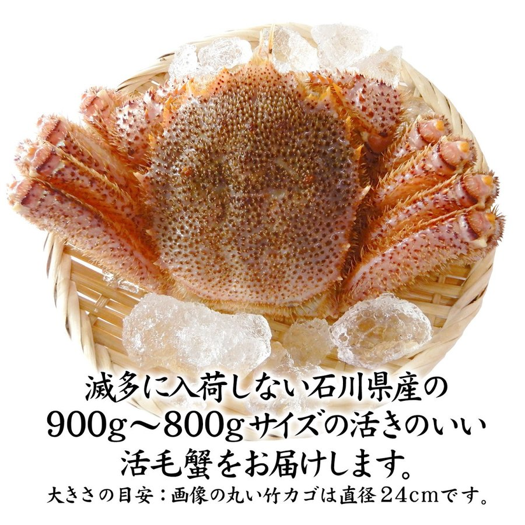 数量限定入荷!活毛蟹 1匹 900g〜800g (石川県産) maruya 02