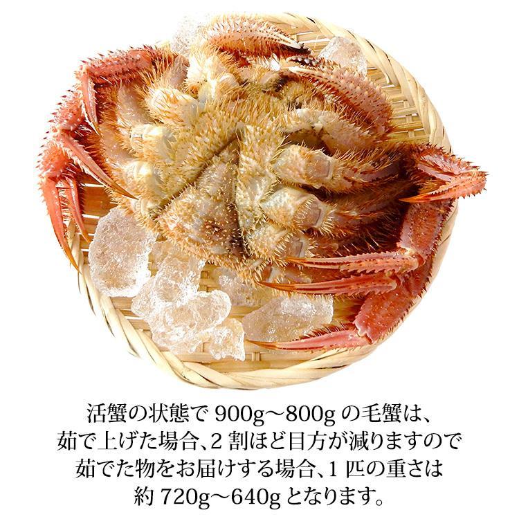 数量限定入荷!活毛蟹 1匹 900g〜800g (石川県産) maruya 03