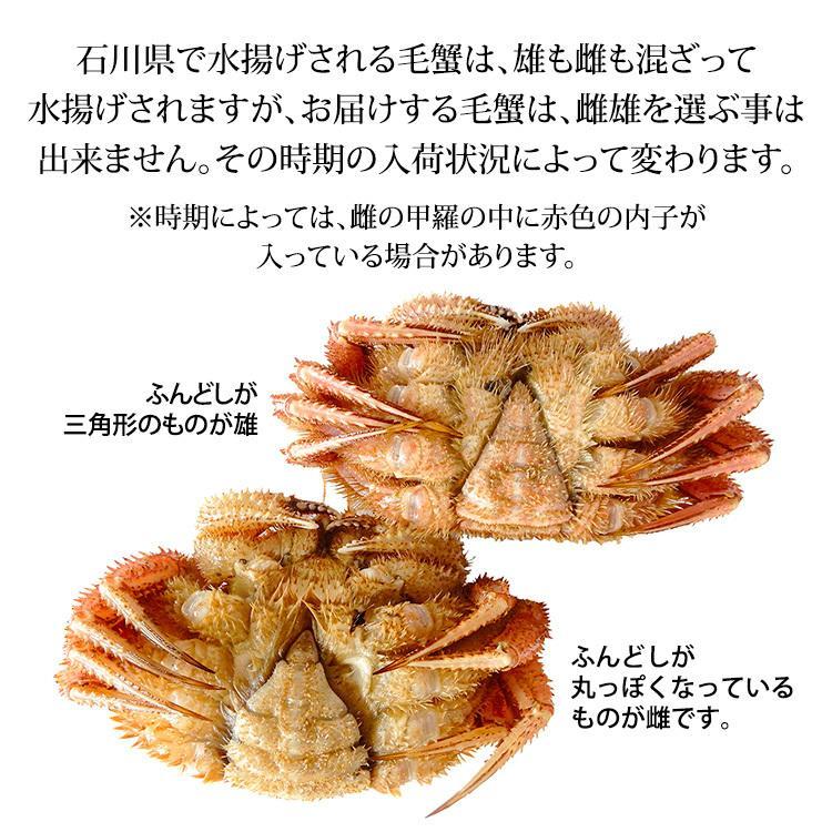 出荷日9/26〜9/27限定 数量限定入荷!毛蟹 3〜5匹 合計1.5kg詰合せ 訳あり:足折れ/雄雌混合 (石川県産)|maruya|04