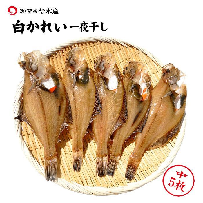 超特価 白かれい 新入荷 流行 干物 一夜干し 中:18〜15cm×5枚 石川県産 詰め合わせ