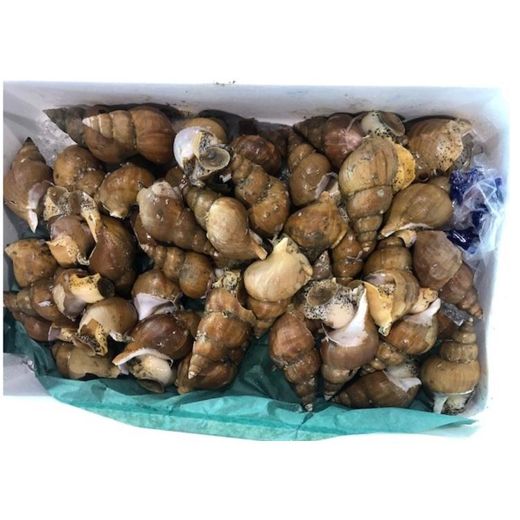 ツブ つぶ 冷凍開きツブ ロシア産 北海道加工 1kg入 1kgに20〜40枚入 お刺身用 条件付き送料無料 ギフト お歳暮|masaoshoten|12
