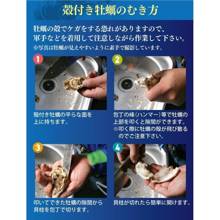 送料無料 宮城県産 殻付き 活牡蠣 3kg ※大小混合で約15~50個【加熱用】|maticyoku|09