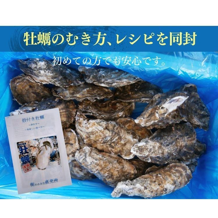 送料無料 宮城県産 殻付き 活牡蠣 3kg ※大小混合で約15~50個【加熱用】|maticyoku|10