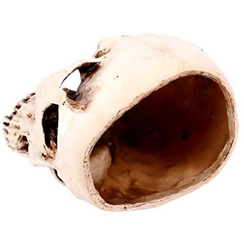[クイーンビー] ドクロ ガラ空き インテリア 植木鉢 プランター 小物入れ 頭蓋骨 髑髏 骸骨 ガイコツ スカル リアル おしゃれ イベント 小道具|mbe-1|03