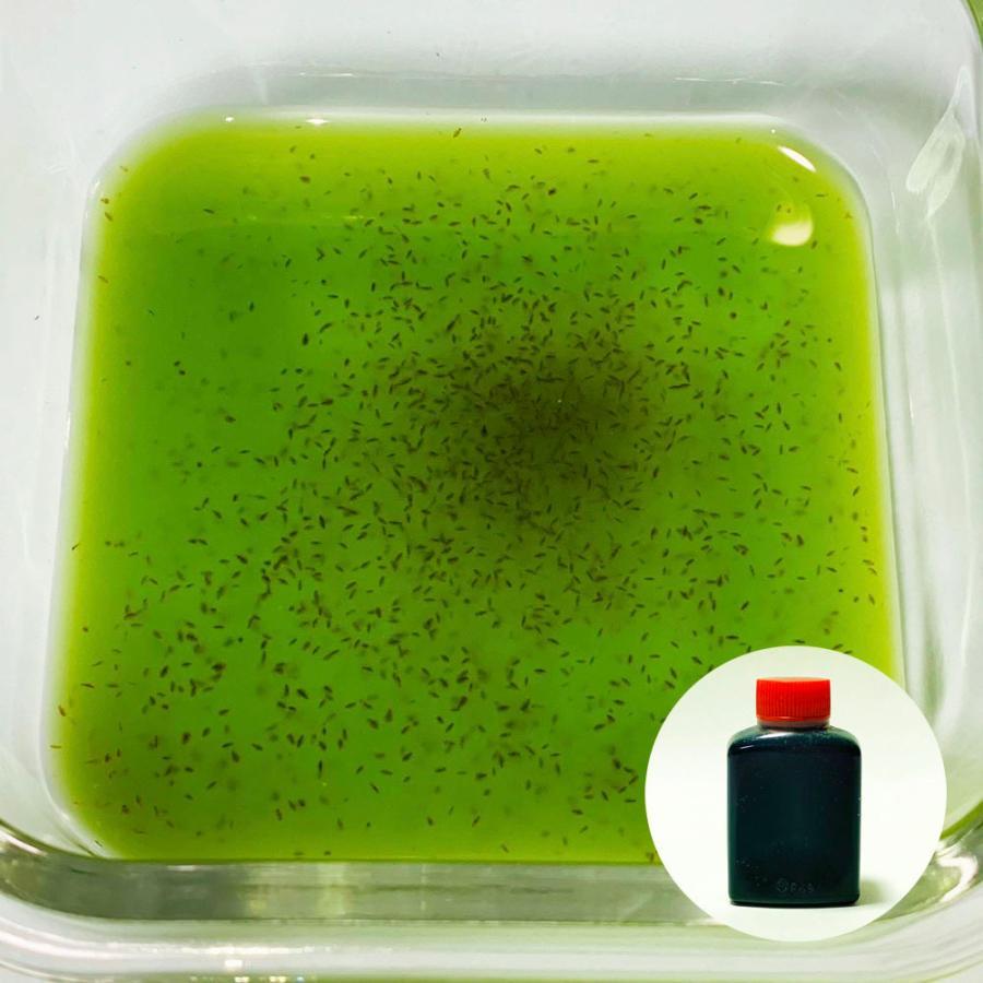 タマミジンコ 約1500匹 0.5g +スーパー生クロレラ クール宅急便 30ml+繁殖方法説明書付き 販売実績No.1 バースデー 記念日 ギフト 贈物 お勧め 通販