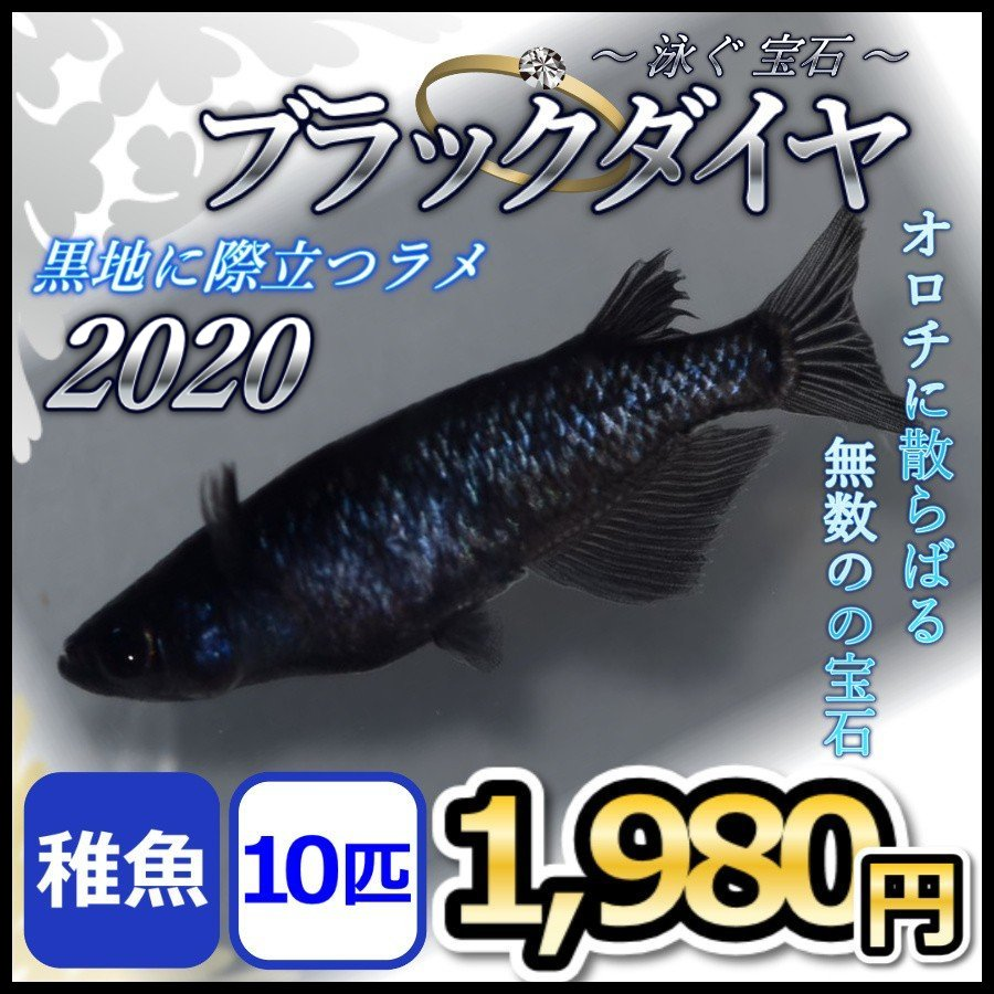 メダカ 並行輸入品 ブラックダイヤメダカ 2020 SEAL限定商品 オロチラメ オロチめだか 稚魚10匹