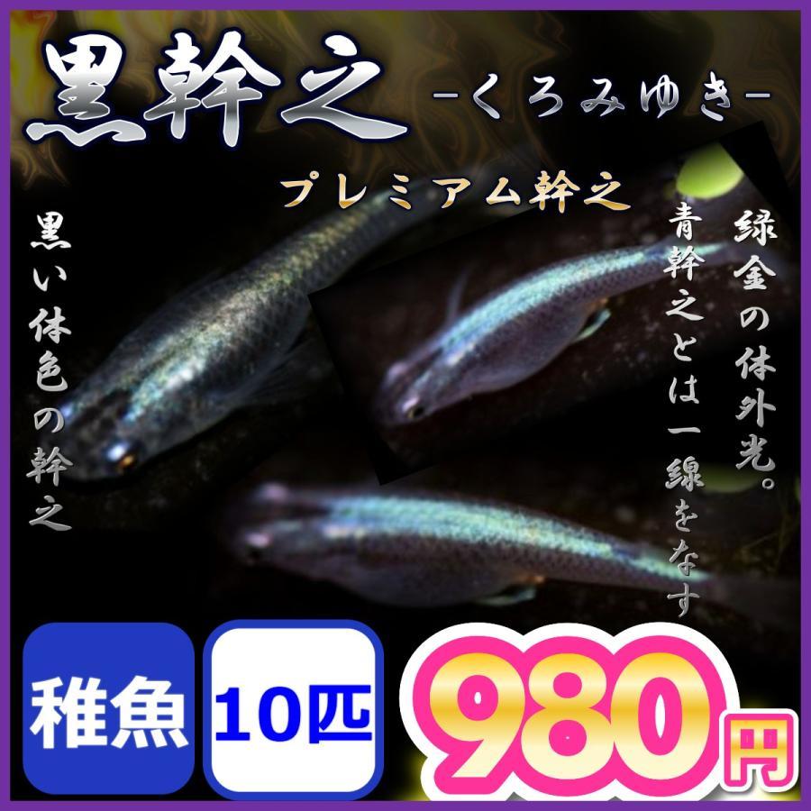 メダカ 格安店 黒幹之めだか 稚魚10匹 営業