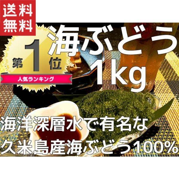 海ぶどう 沖縄 業務用 1kg 久米島産海ぶどう1kg(500g×2パック) お土産 海洋深層水 で有名な久米島産海ぶどう100% おすすめ 春ウコン茶2包おまけ付き mejapon