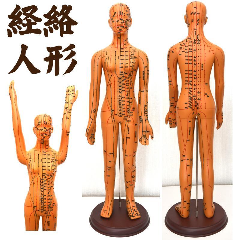 経絡・経穴(ツボ)人形 人体模型 鍼灸 エステサロン用品|meridian