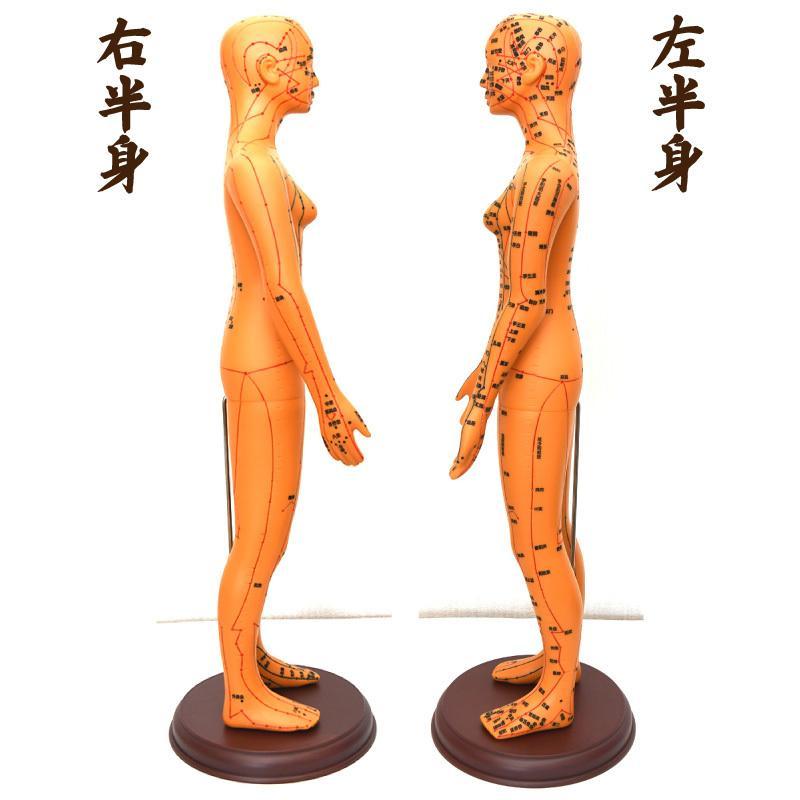 経絡・経穴(ツボ)人形 人体模型 鍼灸 エステサロン用品|meridian|02