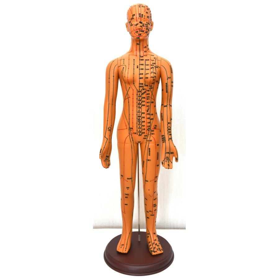 経絡・経穴(ツボ)人形 人体模型 鍼灸 エステサロン用品|meridian|03