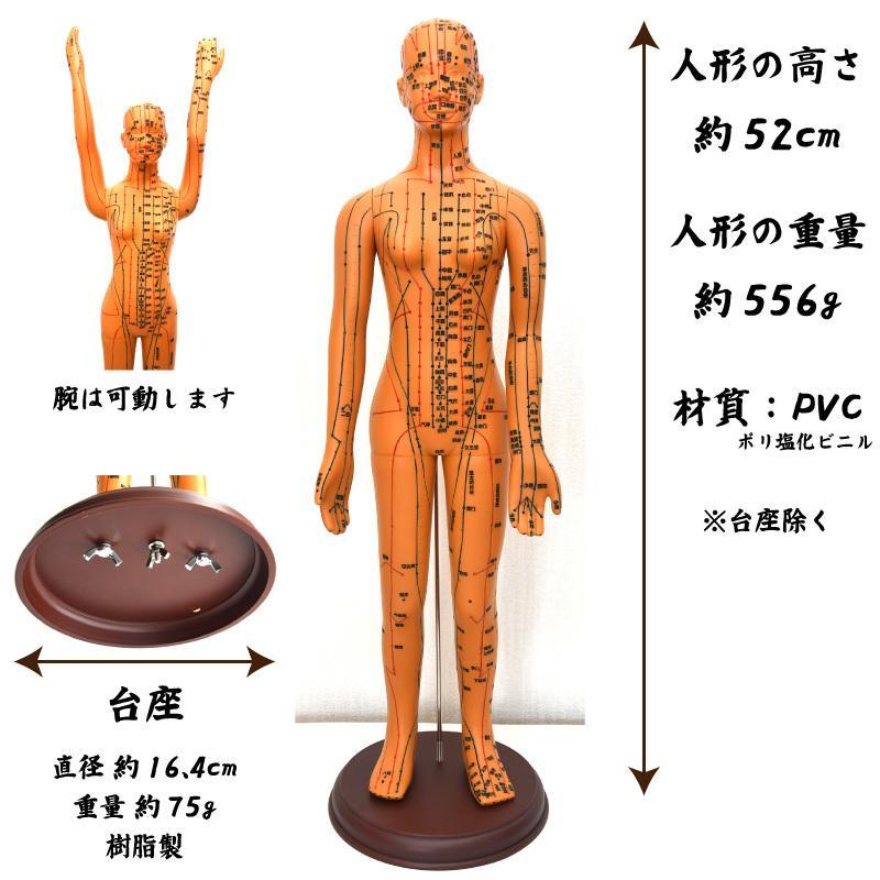 経絡・経穴(ツボ)人形 人体模型 鍼灸 エステサロン用品|meridian|04