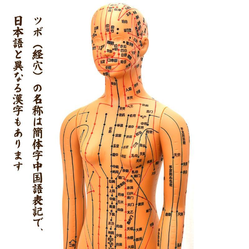経絡・経穴(ツボ)人形 人体模型 鍼灸 エステサロン用品|meridian|05