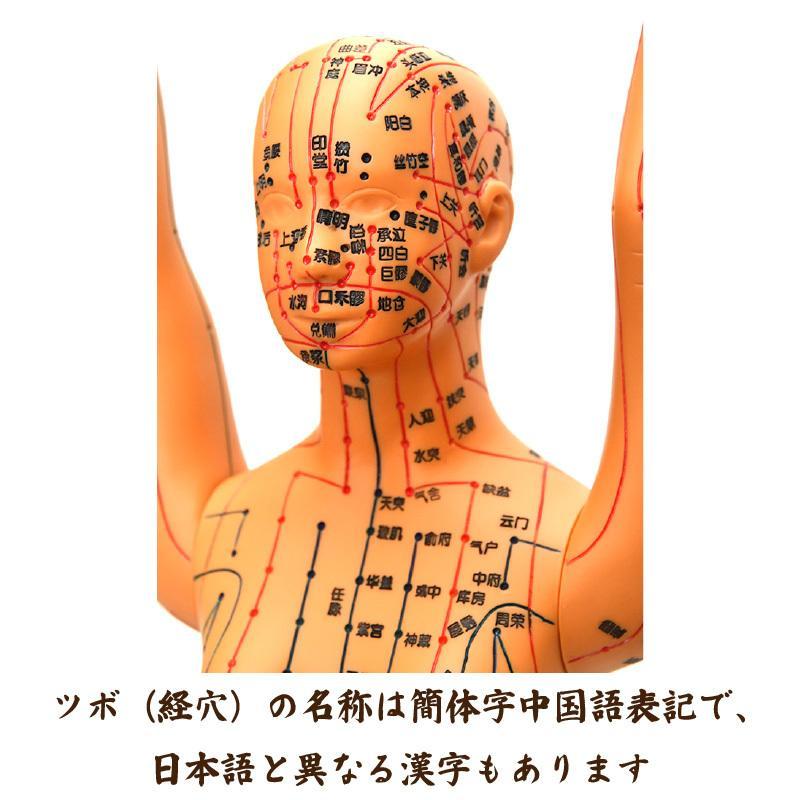 経絡・経穴(ツボ)人形 人体模型 鍼灸 エステサロン用品|meridian|06