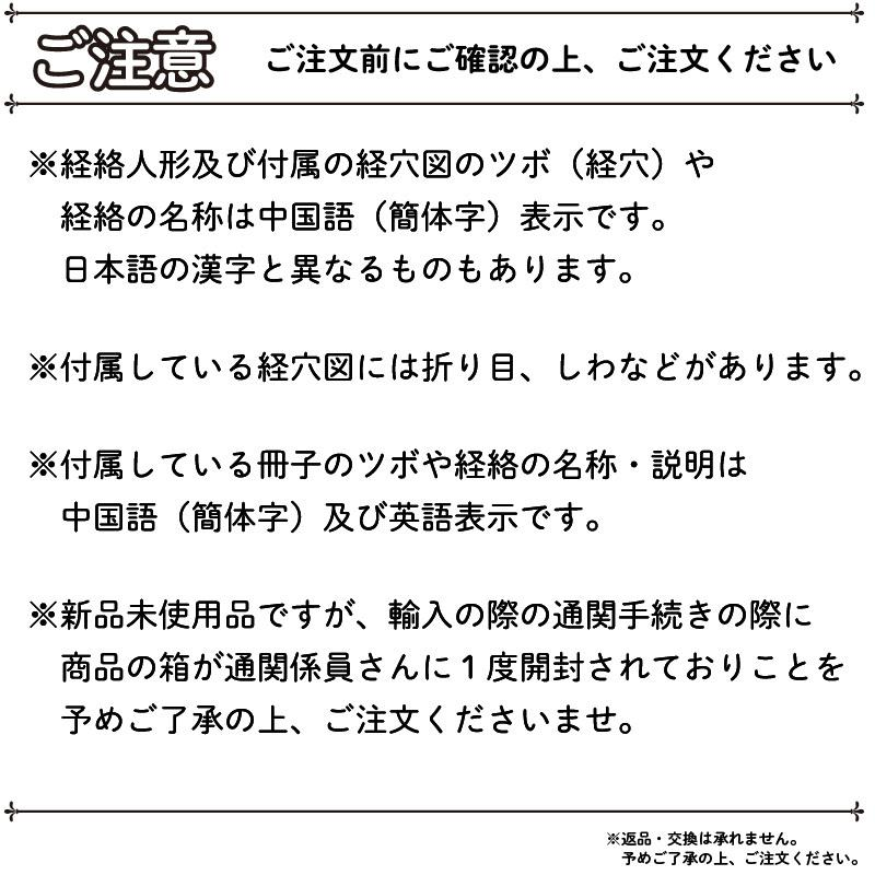 経絡・経穴(ツボ)人形 人体模型 鍼灸 エステサロン用品|meridian|07