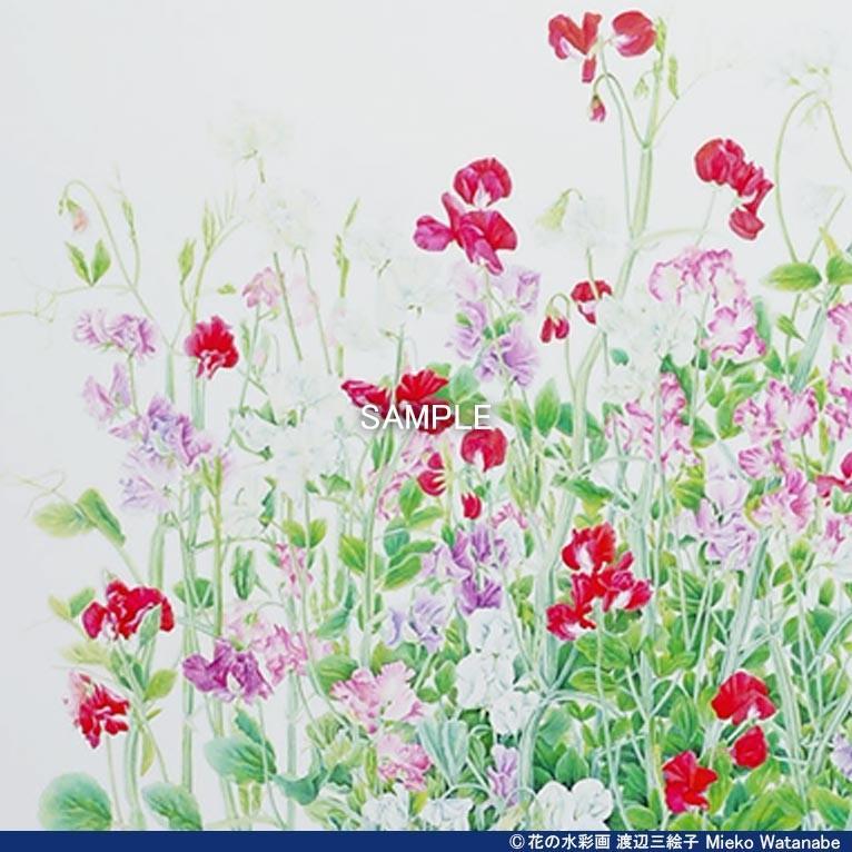 渡辺三絵子 花の水彩画 ジークレー版画(複製画)「スイトピー」額装Mサイズ|mieko-watanabe|05
