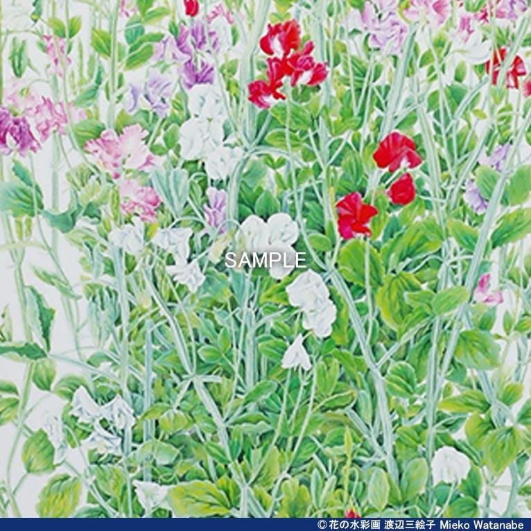 渡辺三絵子 花の水彩画 ジークレー版画(複製画)「スイトピー」額装Mサイズ|mieko-watanabe|07