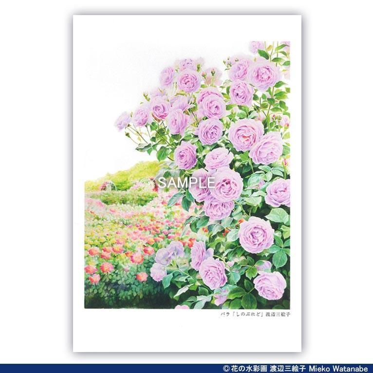 渡辺三絵子 花の水彩画 ポストカード12枚セット|mieko-watanabe|12