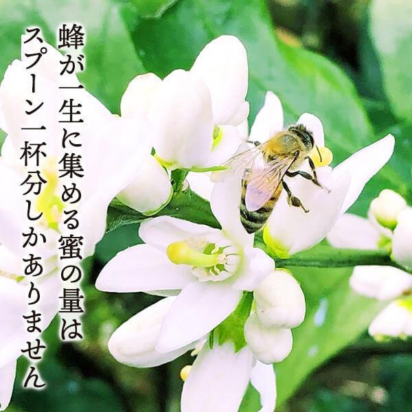 有田のはちみつセット みかん蜂蜜230g 百花蜂蜜230g 和歌山県産 生はちみつ ちょっと贅沢 数量限定 プレゼント ご自宅用 お家時間 ご当地|mikannokai|03