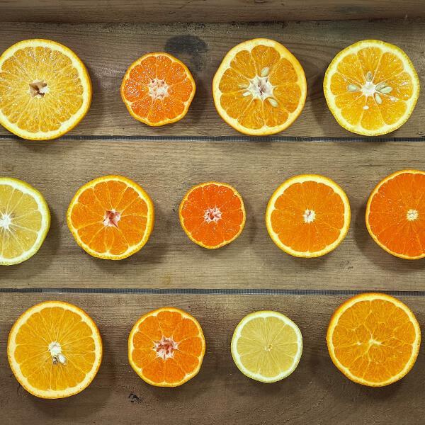 【付録付き】有田の柑橘ごろごろ゛3種以上  AB品 2kg 秀優品混合 柑橘 フルーツ 果物 季節限定 箱買 送料無料 贈り物 贈答用 プレゼント ご当地 mikannokai 04