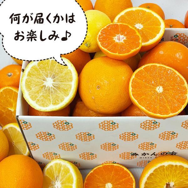 【付録付き】有田の柑橘ごろごろ゛3種以上  AB品 2kg 秀優品混合 柑橘 フルーツ 果物 季節限定 箱買 送料無料 贈り物 贈答用 プレゼント ご当地 mikannokai 05
