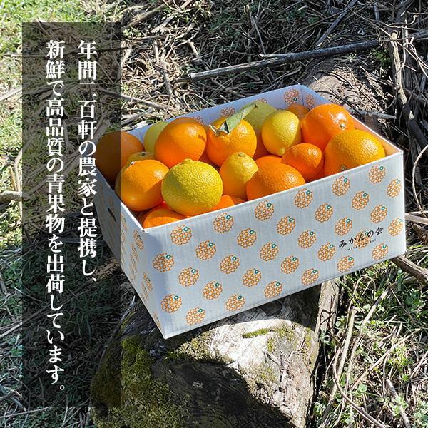 【付録付き】有田の柑橘ごろごろ゛3種以上  AB品 2kg 秀優品混合 柑橘 フルーツ 果物 季節限定 箱買 送料無料 贈り物 贈答用 プレゼント ご当地 mikannokai 08
