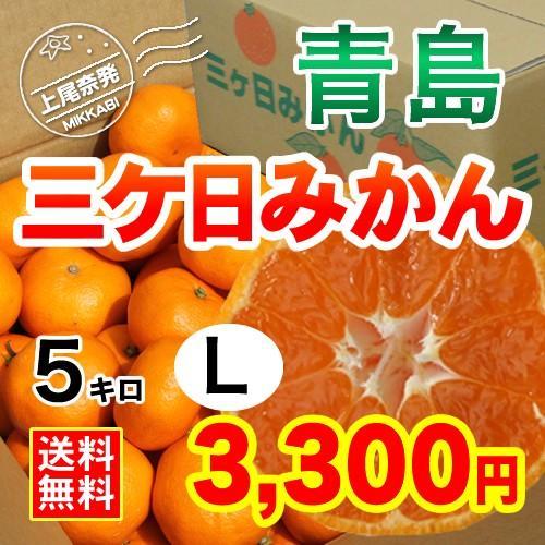三ケ日みかん贈答用青島Lサイズ(5kg) mikkabimikan
