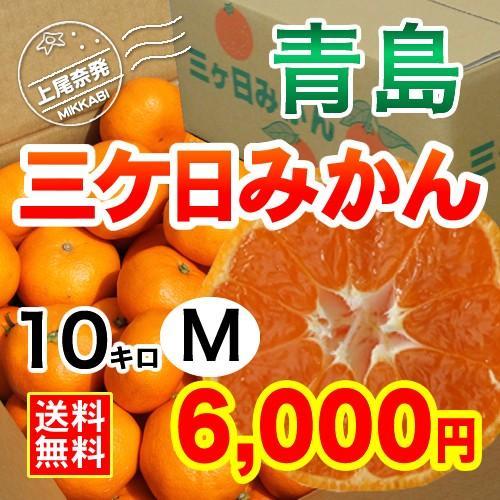 三ケ日みかん贈答用青島Mサイズ(10kg)|mikkabimikan