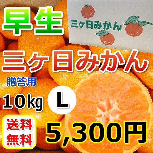 みかん 三ケ日みかん お歳暮 早生 Lサイズ(10kg) mikkabimikan