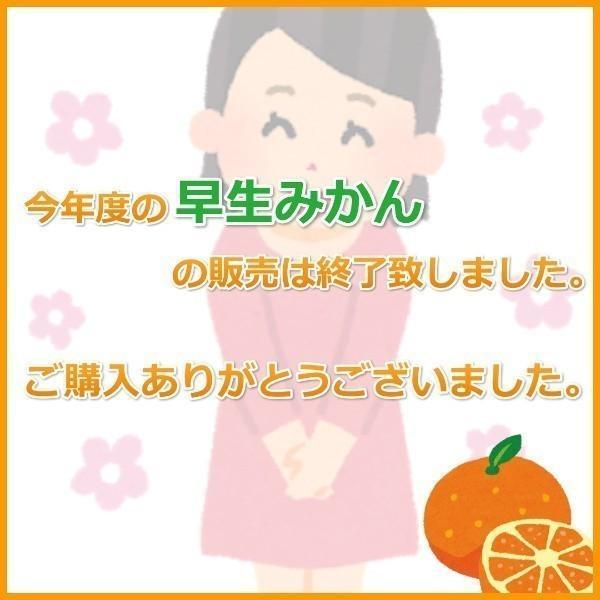 みかん 三ケ日みかん お歳暮 早生 L サイズ(5kg)|mikkabimikan|02