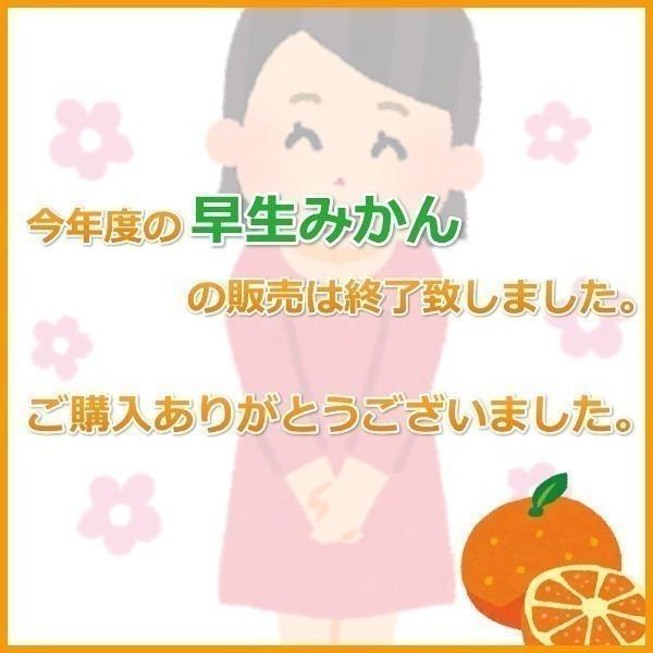 みかん 三ケ日みかん お歳暮 早生  LLサイズ(9kg) mikkabimikan 02