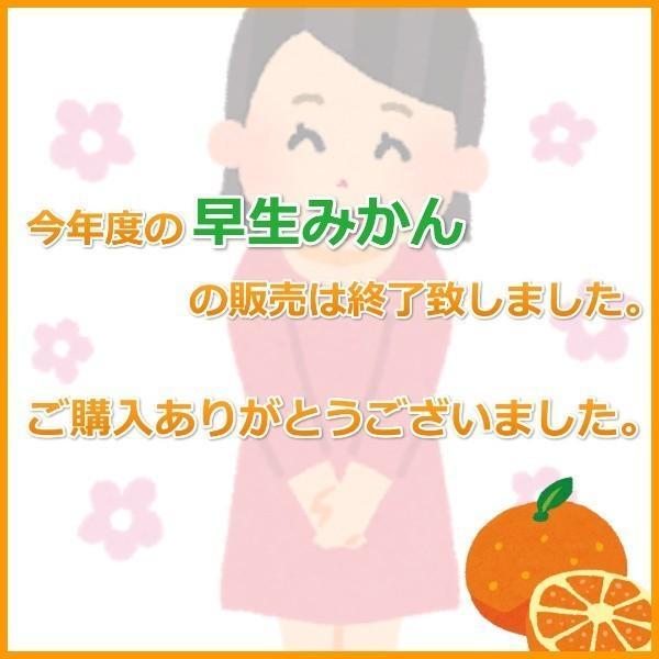 みかん 三ケ日みかん 早生 訳あり (不揃い・キズ)(5kg)|mikkabimikan|02
