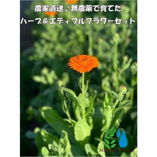 農家直送!里山育ちの無農薬ハーブ&エディブルフラワーセット 滋賀県WEB物産展 いまだから地産地消 minakuchi-farm