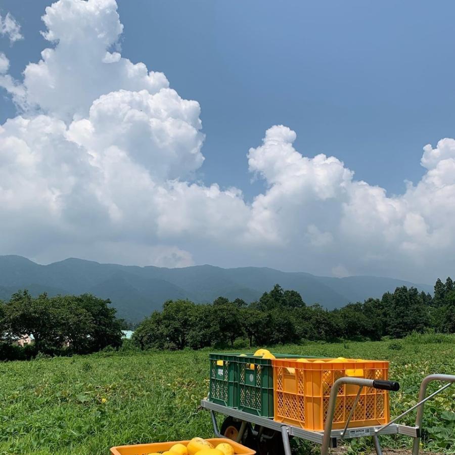 【有機JAS認証】農家直送!近江伝統野菜 無農薬 まくわうりセット|minakuchi-farm|03