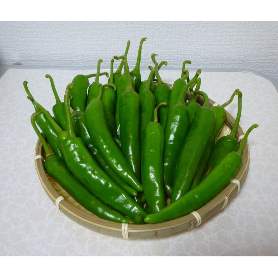 青 唐辛子 栽培
